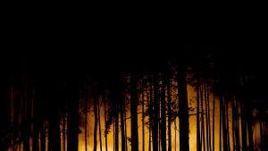 Tummien puiden takana metsäpalon liekit hehkuvat keltaisina.