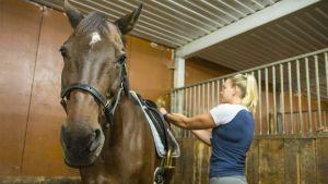 Uimari Jenna Laukkanen satuloi hevosta tallilla.
