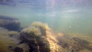 Ahdinparta veden alta