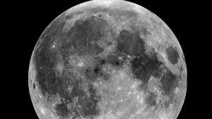 Tarkka kuva Kuusta pintakuvioineen.