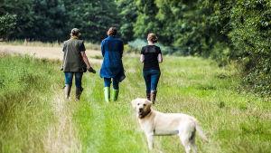 Naiset kävelylenkillä pellolla - koira kuvan etualalla.