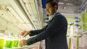 Amit Bhatnagar johtaa mikrolevätutkimusta Itä-Suomen yliopistossa