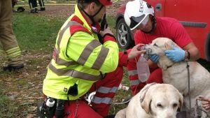 Savusukeltajat elvyttivät kahta omakotitalon palosta pelastettua koiraa Pyhtäällä