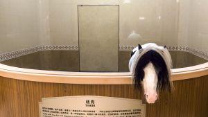 hevonen pilttuussa