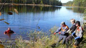 Kolme miestä vetää puunrunkoa järven ruohikkoiselle rannalle. Vedestä kurkistaa sukeltaja.