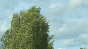 Gif-kuva tuulessa heiluvista puista.