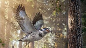 Piirroskuva harmaatäplikkäässtä linnusta lentämässä metsässä.