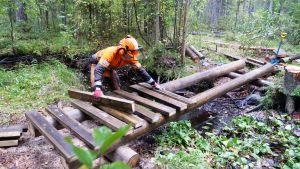 Metsässä vaeltajille rakennetaan uutta siltaa polulle