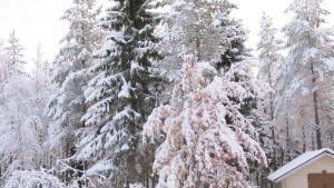 Ensilumi Suomussalmi talvi 2018