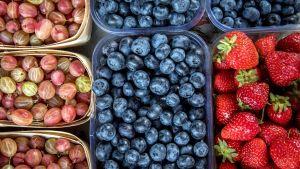 karviaisia mustikoita ja mansikoita rasioissa