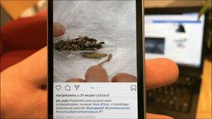 Kännykän näytöllä selataan Yle Oulun Instagram-sivua
