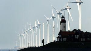 tuulivoimaloita Hollannissa.