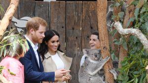 Prinssi Harry ja hänen puolisonsa Meghan Tarongan eläintarhassa, Sydneyssä.
