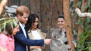 Harry, Meghan ja koala.