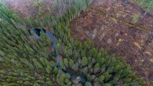Avohakkuu yksityismetsässä Rovaniemellä lokakuussa 2018. Puron rannat on säästetty hakkuulta  metsälain mukaisesti erityisen arvokkaana elinympäristönä.