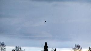 Trombi lennättää kattopellin kappaletta Hattulassa