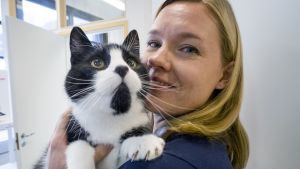 Eläinlääkäri Jenni Nystedt pitelee sylissään Teppo-kissaa.