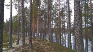 luontopolku, Tipasoja, harju, maisema, luonto, metsä