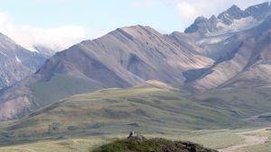 Denalin kansallispuisto Alaskassa.