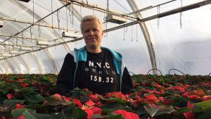 Nainen seisoo kasvihuoneessa tuhansien joulutähtien keskellä.