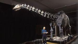 Dinosauruksen luuranko