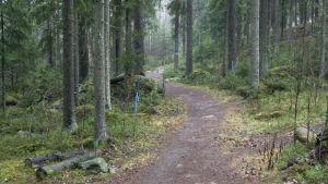 Metsä Hervannassa