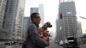 Mies kantaa koiraa kadulla.