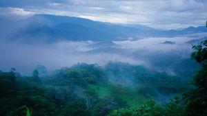Ilmakuva pilvien peitossa olevasta sademetsästä.
