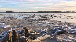 Ennätysmatalalle laskenut vedenpinta paljastaa Hirvijärven pohjasta kantoja. Ne ovat taiteilija Ira Karhulähteelle inspiraation lähde.