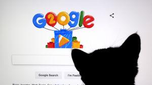 Kissa katselee Googlen hakusivua.