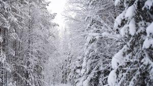 Luminen näkymä -20 asteen pakkasessa Polvensuon Piispanjärvellä Suomussalmella jouluaattona.