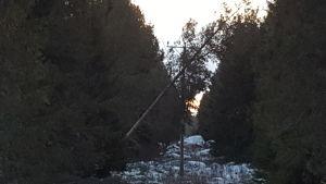 Puu on kaatunut sähkölinjalle Pohjanmaalla.