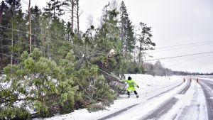 Sähkölinjojen päälle kaatuneita puita Aapeli-myrskyn jäljiltä Emkarbyssa, Finströmin kunnassa Ahvenanmaalla 2. tammikuuta 2019.
