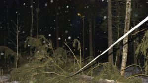 Sähkölinjan päälle kaatunut puu.