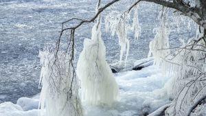 Jäätynyt oksa