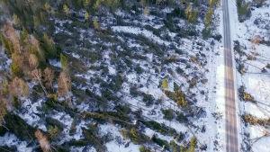 Myrskyssä kaatunutta metsää Ahvenanmaalla.