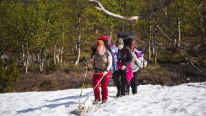 Lunta kesällä Pallas-Yllästunturin kansallispuistossa.