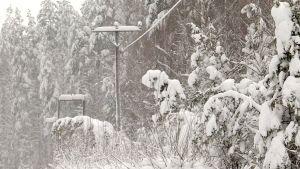 lemi metsä luminen sähkölinja