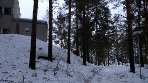 Kävelypolku ja puita puistossa Savonlinnassa