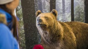 Täytetty karhu Puijon tornin aulassa.