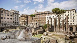 Rooman ytimessä sijaitseva Largo Argentina on ollut vuosikausia lähinnä kissojen asuinpaikkana.