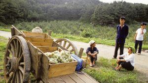 Maanviljely