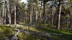 Lapinmaja sijaitsee Lemmenjoen kansallispuiston välittömässä läheisyydessä.