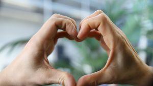 Miehen ja naisen käsi muodostaa sydämen