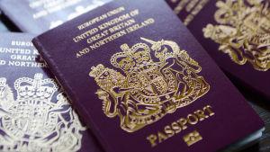 Britannian passeja, joiden kannessa näkyy teksti 'Euroopan Unioni'.