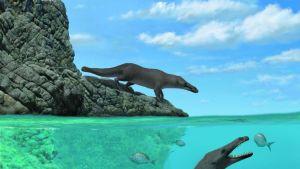 Piirroskuva kahdesta nelijalkaisesta eläimestä. Toinen seisoo rantakalliolla ja toinen sukeltaa kaloja saalistamassa.