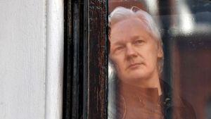 Julian Assange katselee ulos ikkunalasin takaa.