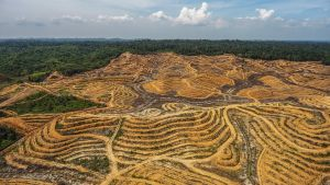 Öljypalmuviljelmä Leuserin kansallispuiston reunalla Acehissa, Indonesiassa.