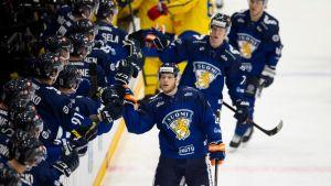 Leijonat ihmennousuun Ruotsia vastaan