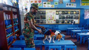 Pommikoira etsimässä jälkiä räjähteistä koulussa Colombossa, Sri Lankassa 5. toukokuuta.